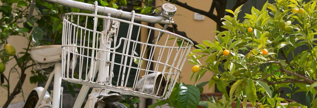 """im """"A Casa di Tom"""" B & B den Garten mit Zitronen und Orangen"""